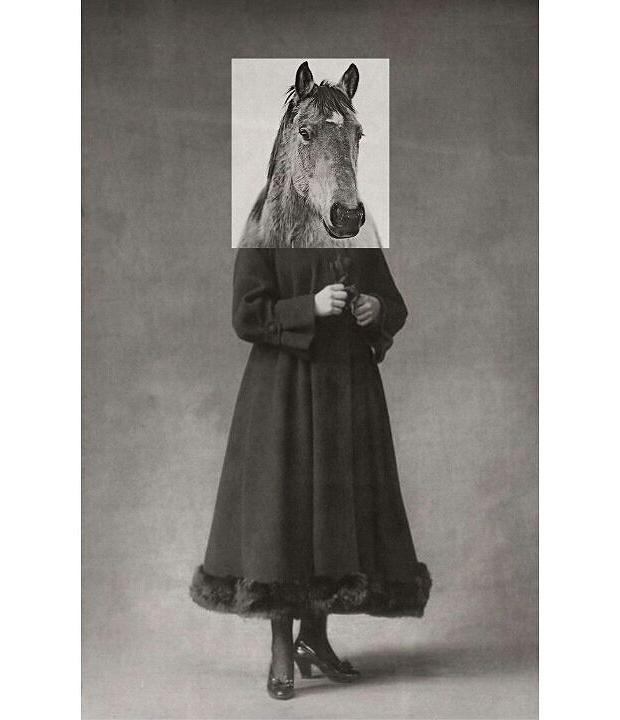 animals-collages-04