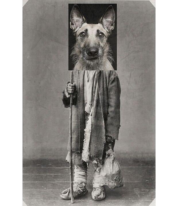 animals-collages-06