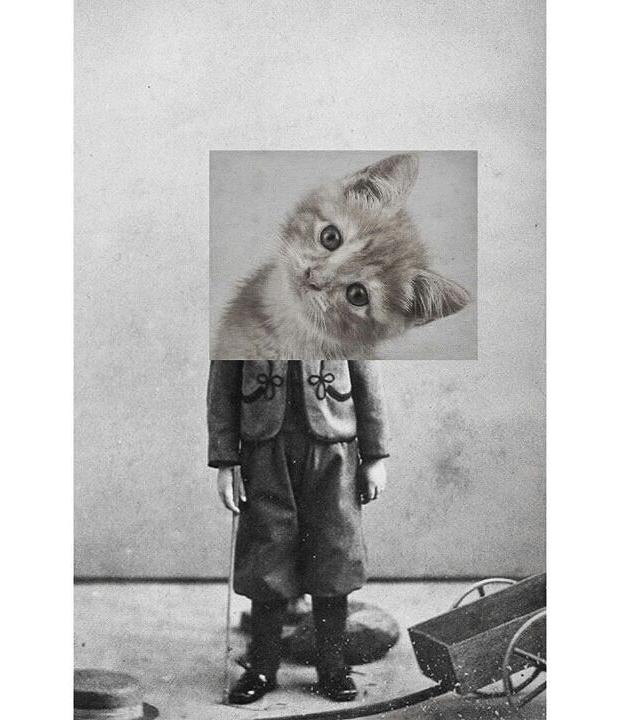 animals-collages-09
