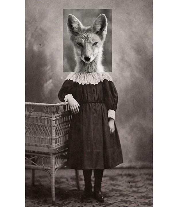 animals-collages-11